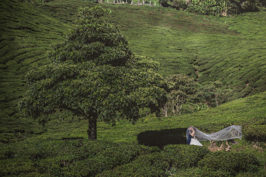 pre-wedding-at-cameron-highlands-7239
